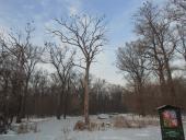 018 Žebračka v zimě