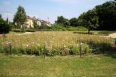 Čapkova zahrada (Michalov)