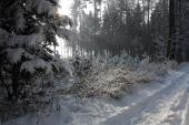 Romantika v lese