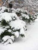 Příroda v zimní čepici