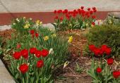 Jaro s tulipány 3